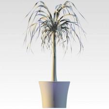 植物00005新