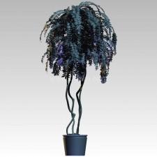 植物00029新