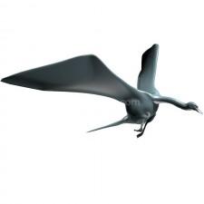 飞行1 鸟 3d模型 obj文件
