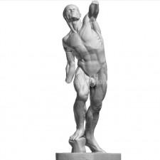解剖人 石膏像 3D扫描模型