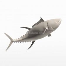 跃 蓝鳍金枪鱼 鱼类 动物