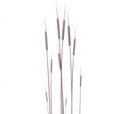 蒲棒04 水生植物 3D模型