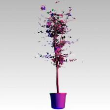 植物00186新