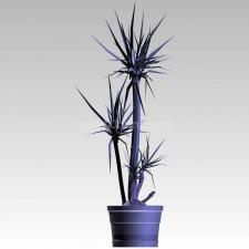 植物00156新