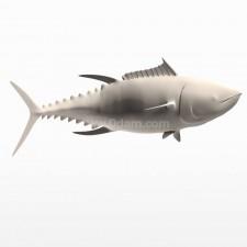 追 蓝鳍金枪鱼 鱼类 动物