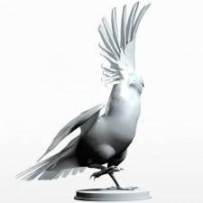 04葵花鹦鹉 鸟类 动物 3D模型