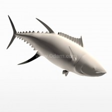 潜 蓝鳍金枪鱼 鱼类 动物