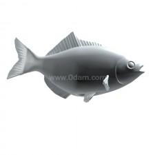 上游 鲫鱼 鱼类 动物 3d模型