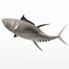 冲 蓝鳍金枪鱼 鱼类 动物