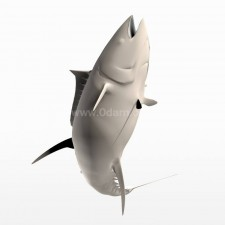 跳 蓝鳍金枪鱼 鱼类 动物