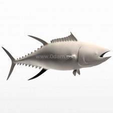正姿 蓝鳍金枪鱼 鱼类 动物